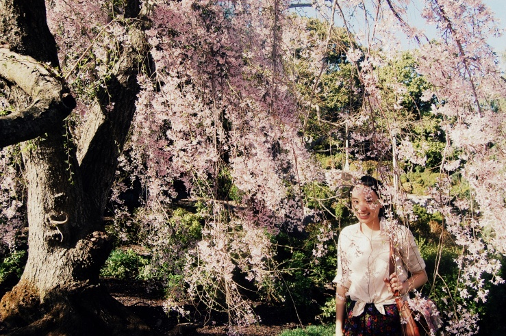 Weeping Cherry-001