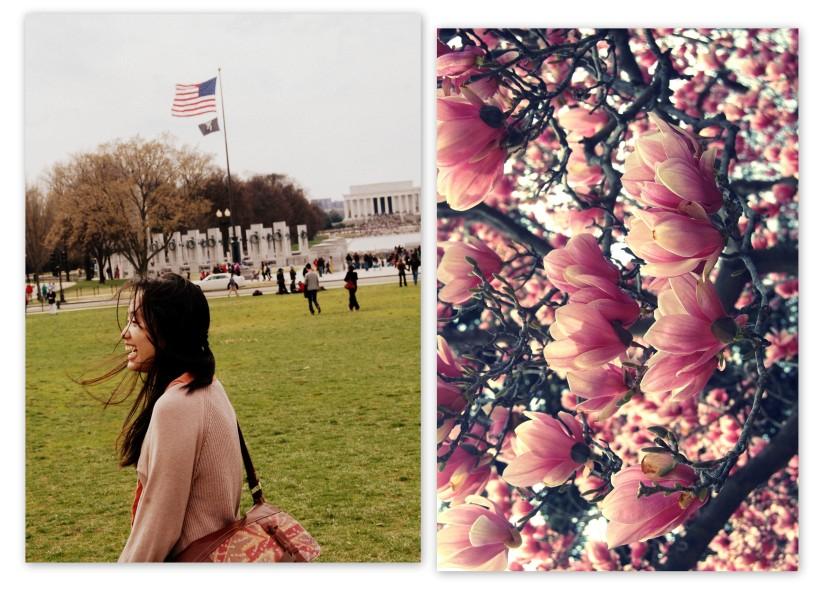 Cherry Blossoms-001